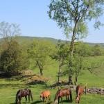 Hillside Creek Stables